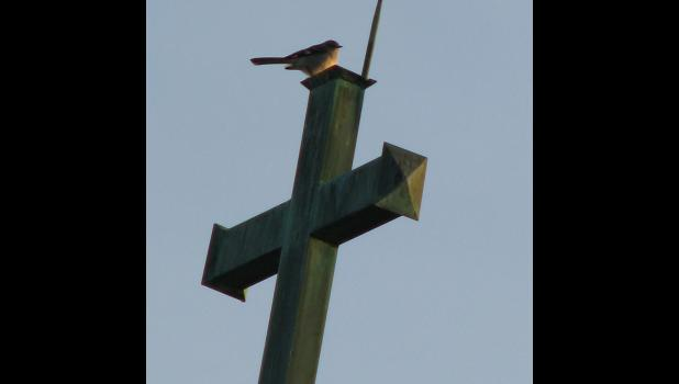 April 13: A bird, way up high, atop a church steeple, caught my eye, and was kind enough to stay long enough for a picture.