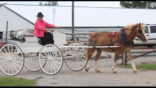 Sarah Hileman Song showed her horse Chad in a driving class at the 2018 Union County Fair in Anna. Photo provided.