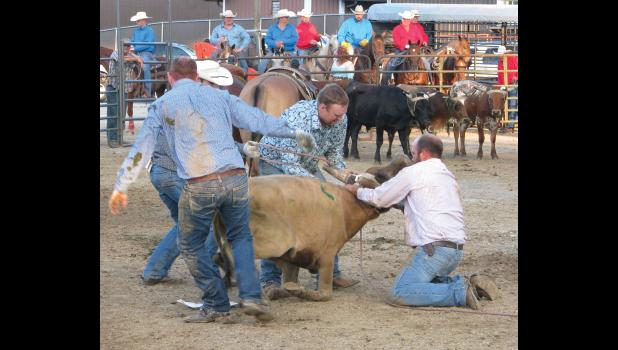 A ranch rodeo was held Friday evening, Aug. 19, in front of the grandstand. Events included team doctoring, wild cow milking, team sorting, trailer loading and ranch team roping.