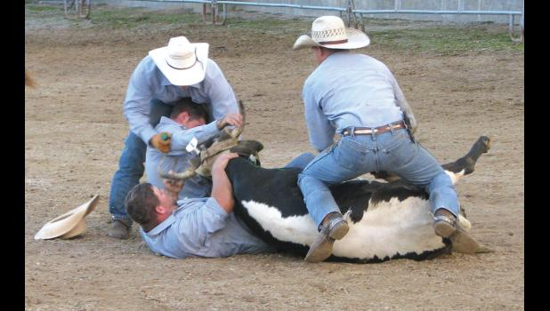 Eight legs may have been better than four: four cowboys worked to take a steer to the ground during the ranch rodeo. Note that one of the cowboys is, well, under the critter. Another one of the cowboys is, well, under the critter and a cowboy. Ouch.