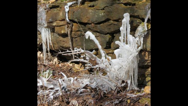 Plants covered in ice along the Quetil Trail.