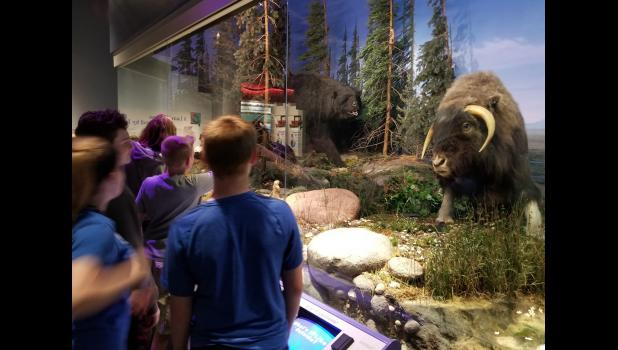 Students from Jonesboro School look at an Illinois State Museum exhibit featuring a Pleistocene forest-tundra of 24,000 years ago. The exhibit shows a giant short-faced bear pursuing a Harlan's musk ox. Photo provided.