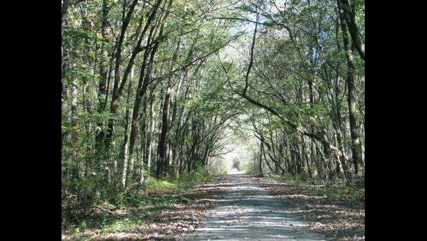 Trees appeared to create an archway over the LaRue Road when this picture was taken during a visit late last week.