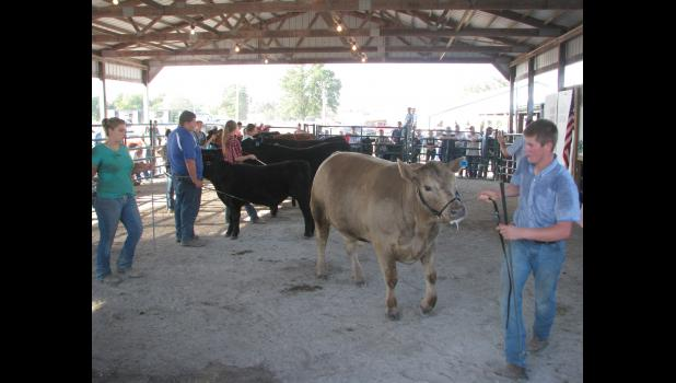 Young people displayed their cattle during the Senior Beef Showmanship event on Wednesday, Aug. 24