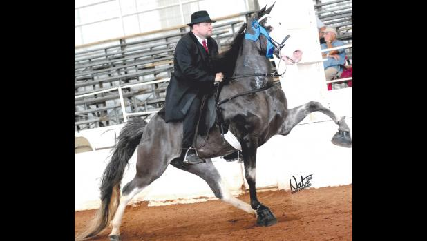This is one of the undefeated champion horses owned by the Meisenheimer family of Jonesboro.