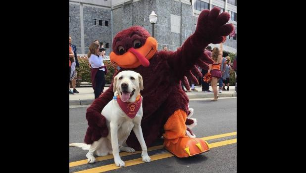 """Moose, a dog (the one on the left), is now Dr. Moose, and still a dog. Moose is a therapy dog at Virginia Tech. In the picture, Dr. Moose is with the HokieBird. HokieBird is Virginia Tech's official mascot. Guess that makes HokieBird an okee, dokee bird. By the way, did you know (I didn't, until Friday, that there's a bluegrass/American roots children's music duo from Minneapolis called the Okee Dokee Brothers? In 2012, the duo released a CD/DVD called """"Can You Canoe?"""" The CD/DVD was created during a paddle"""
