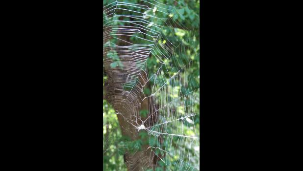 A spider web...which might be stating the obvious...