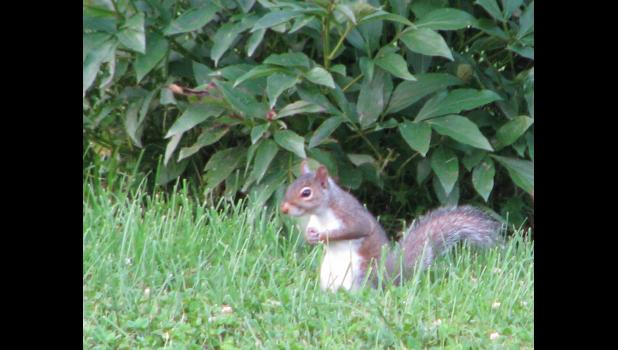 Here's hoping that the squirrel was offering a prayer of forgiveness to the god of typographical blunders on behalf of the person who tries to entertain you each week in this space.