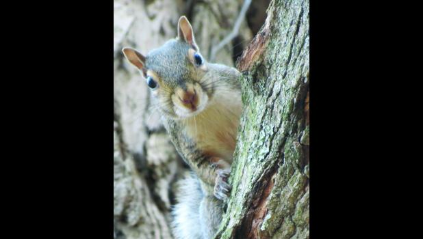 Just because...this squirrel stopped to look down...and maybe say hello...on a Sunday afternoon.