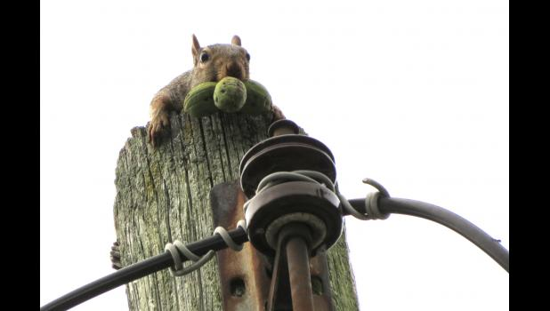 Thank goodness for squirrels. A photographer can always count on them for a photograph.