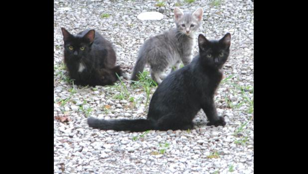 Three little kittens...lost their mittens, but it's pretty warm out, so they don't need mittens anyway.