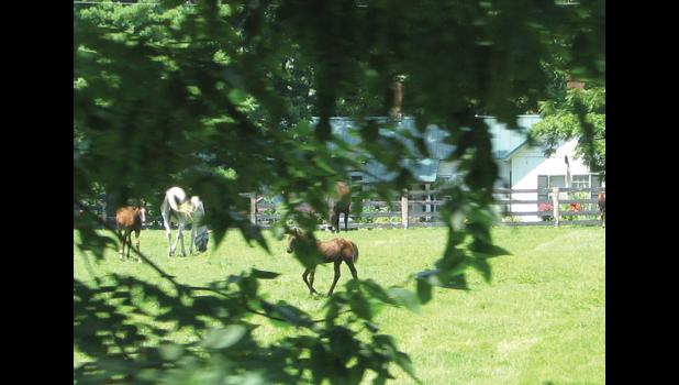 Horses, of courses: Those who travel through countryside near Lexington, Kentucky, most likely are going to see a horse or two. You can almost see a couple of horses through the tree leaves. It's a little difficult to shoot out the window of a train which is on the move. Then again, a trained professional might have been able to get a good picture.