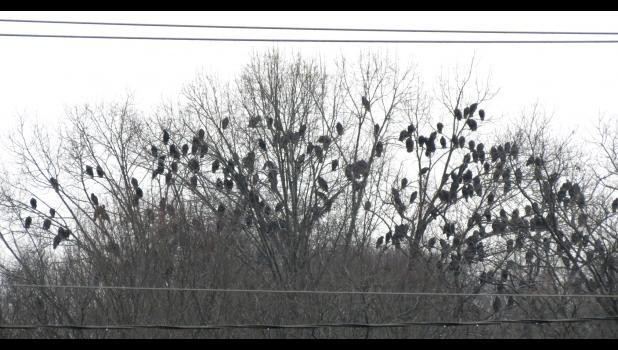 A group of vultures, also known as a committee, or maybe a kettle, or, a wake, if they happen to be feasting on some sumptuous delicacy along the road.